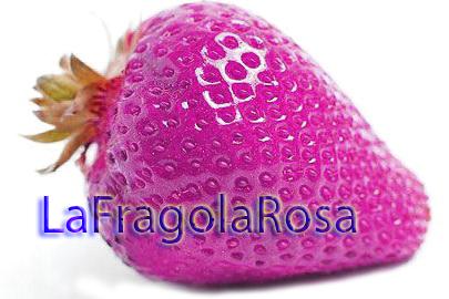 LaFragolaRosa